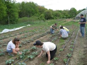 "Bowdoin Alums at Gaining Ground, an organic farm for a ""Day of Service."""